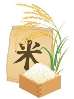 お米の虫対策と保存方法